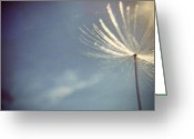Iphonesia Greeting Cards - Instagram photo - Lonely Dandelion  Greeting Card by Marianna Mills