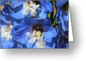 Blue Delphinium Greeting Cards - Into the Blue Greeting Card by Loretta Pokorny