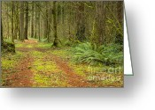 Natures Beauty Greeting Cards - Into the Forest Greeting Card by Idaho Scenic Images Linda Lantzy