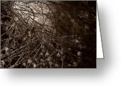 Most Favorite Photo Greeting Cards - Into The Light Greeting Card by Fine Art  Photography
