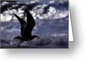 Wildlife Photos Greeting Cards - Into The Sun Greeting Card by Skip Willits
