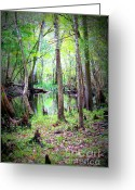 Cypress Knees Greeting Cards - Into the Swamp Greeting Card by Carol Groenen