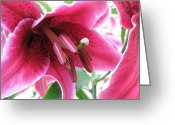 Fushia Painting Greeting Cards - Intoxicating Aroma Lillie Greeting Card by Judy Via-Wolff