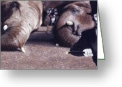 Photorealism Greeting Cards - Introducing Greeting Card by Denny Bond
