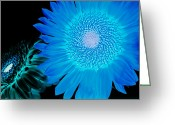 Alhaji Samura Greeting Cards - Inverted Flowers Greeting Card by Alhaji Samura