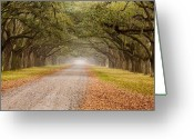 Tree-lined Greeting Cards - Inviting Greeting Card by Eggers   Photography
