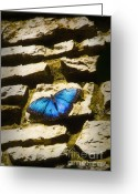 Tropical Gardens Greeting Cards - Iridescence-on-Rocks Greeting Card by Fred Lassmann