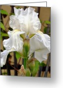 Bud Mixed Media Greeting Cards - Iridescent Iris Greeting Card by Angelina Vick
