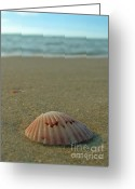 Seashell Art Photo Greeting Cards - Iridescent Seashell Greeting Card by Juergen Roth
