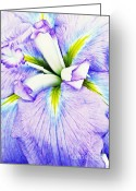 Violet Blue Digital Art Greeting Cards - Iris 11 Greeting Card by Sarah Loft