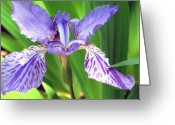 Cheekwood Gardens Greeting Cards - Iris 3 Greeting Card by Joy Neasley