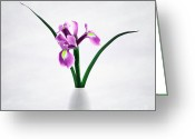 "\""flower Still Life\\\"" Greeting Cards - Iris Greeting Card by Kristin Kreet"