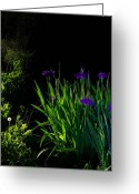 Extended Exposure Greeting Cards - Iris-Night Exposure 3 Greeting Card by Tommy  Urbans