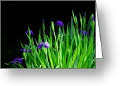 Extended Exposure Greeting Cards - Iris-Night Exposure  Greeting Card by Tommy  Urbans