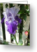Honey Bee Greeting Cards - Irises Fenced In  Greeting Card by The Kepharts