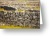 Colour Image Greeting Cards - Irish fences Greeting Card by Gabriela Insuratelu