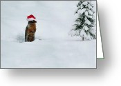 Groundhog Greeting Cards - Is It Christmas Yet Greeting Card by Bill Cannon