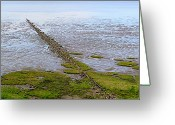 People Walking Greeting Cards - Island Sylt - Mudflat Greeting Card by Marc Huebner
