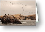 Flock Greeting Cards - Islas Ballestas - Peru Greeting Card by Andrea Cavallini