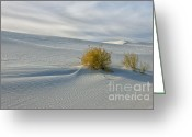 Sand Dunes Greeting Cards - Isolation Greeting Card by Sandra Bronstein