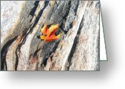 Fall Scenes Greeting Cards - It Has Begun Greeting Card by Randy Rosenberger