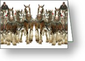 Carriage Team Greeting Cards - Its a Clydesdale Christmas Greeting Card by Jenny Gandert