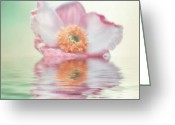 Flower Picture Greeting Cards - Its a dream Greeting Card by Angela Doelling AD DESIGN Photo and PhotoArt