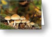 Mushrooms Greeting Cards - Its a Small World Mushrooms Greeting Card by Jennie Marie Schell