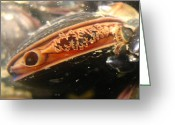Feeding Greeting Cards - Its all Mussel Greeting Card by Paul Ward