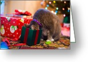Gray Tabby Greeting Cards - Its in Here Somewhere Greeting Card by Diane Macdonald