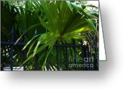 Palm Leaf Greeting Cards - Its Pretty and Tropical in Key West  Greeting Card by Susanne Van Hulst