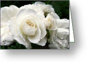 Dew Drops Greeting Cards - Ivory Rose Bouquet Greeting Card by Jennie Marie Schell
