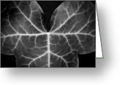 Nadja Drieling Greeting Cards - Ivy Leaf  II - Black And White Macro Nature Photograph Greeting Card by Artecco Fine Art Photography - Photograph by Nadja Drieling