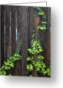 Bruster Greeting Cards - Ivy on Fence Greeting Card by Clayton Bruster