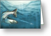 Great Painting Greeting Cards - J-Pluggin Salmon Greeting Card by JQ Licensing