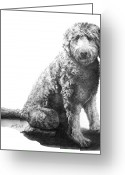 Cherry Drawings Greeting Cards - Jack    Labradoodle Greeting Card by Marianne NANA Betts