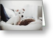 Person Greeting Cards - Jack Russell Terrier Puppy With His Owner Greeting Card by Lifestyle photographer