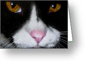 Pets Portraits Greeting Cards - Jack the Cat Greeting Card by Jurek Zamoyski