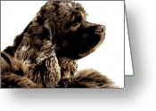 Spaniels Greeting Cards - Jack Waits Greeting Card by Norman  Andrus