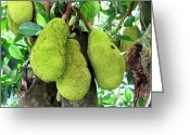 Hawai Greeting Cards - Jackfruit au Naturel  Greeting Card by Karon Melillo DeVega