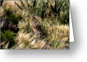 Jackrabbit Greeting Cards - Jackrabbit Greeting Card by David Lee Thompson