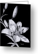 Stippling Greeting Cards - Jacquis Lily Greeting Card by Linda Hiller