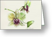 Dendrobium Greeting Cards - Jade Dendrobium Greeting Card by Joan Garcia