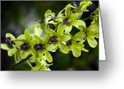 Dendrobium Greeting Cards - Jade Dendrobium Orchids Greeting Card by Karon Melillo DeVega