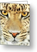 Big Cat Art Prints Greeting Cards - Jaguar Greeting Card by Bill Fleming