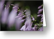 First Star Art By Jammer Greeting Cards - Jammer Hostas 002 Greeting Card by First Star Art