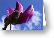 Magnolia Mixed Media Greeting Cards - Japanese Magnolia - Seasonal Garden Flower Greeting Card by Photography Moments - Sandi