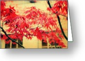 Red Leaves Greeting Cards - Japanese Maple Greeting Card by Cathie Tyler