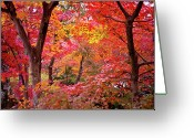 Row Greeting Cards - Japanese Maple Trees Greeting Card by I love Photo and Apple.