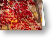 Arboretum Greeting Cards - Japanese Maples Greeting Card by Susan Cole Kelly